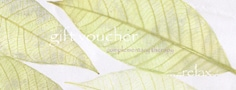 leaf 3 voucher with text -photoshop2 copy
